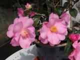Fleurs_Tony1.jpg