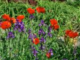 Fleurs_Tony14.jpg