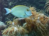 An aquarium in the Green Island Museum