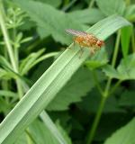 Some creepy Fly