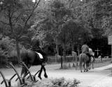 Neighbours on horseback