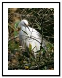 Egret-in-Tree.jpg