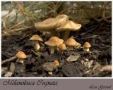 Mushrooms - Sept. 14-04