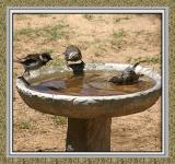 Fun at the Bird Bath