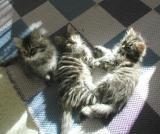 Kolme pentua nauttii auringosta.