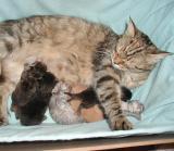 Mamma ja viikon ikäiset muksut.