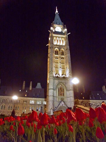 Peace Tower & Tulips