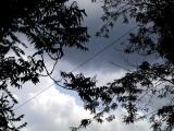 Storm brewing.jpg(290)