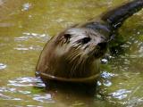 Otters profile.jpg(319)