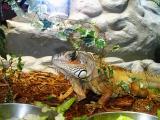 Cute lizard2.jpg(235)