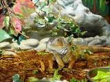 A cute lizard.jpg(232)