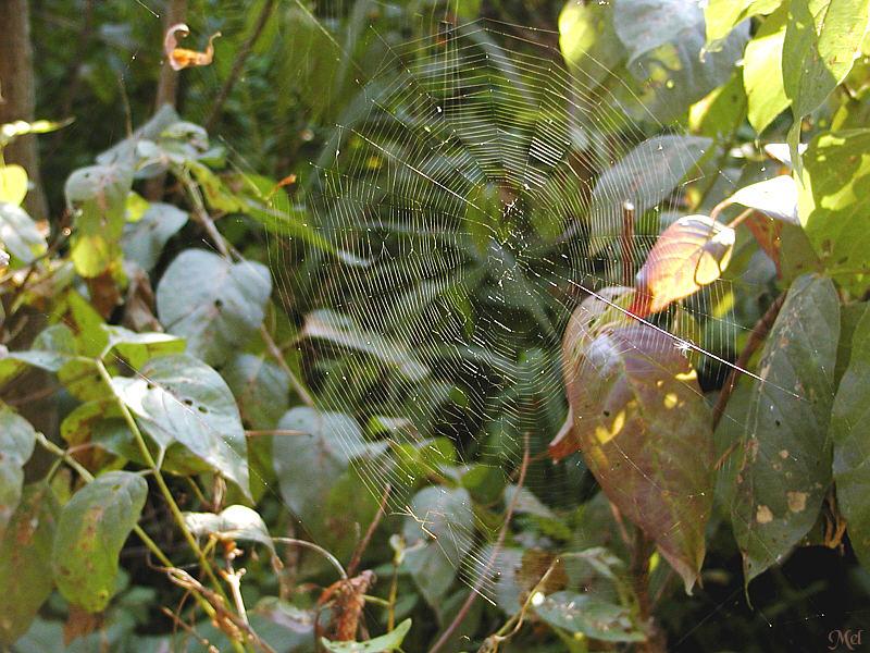 Spiderweb1.jpg (9/13)(256)