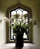 4th:: Tulips ::  by Tim Ashley