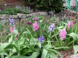 Hyacinths and Fritillaria Meleagris