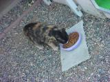 Heidi the cat eating