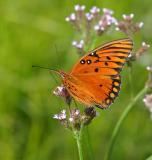 orangefly.jpg