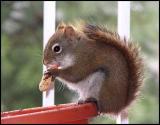 Peanut Delight