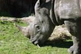 Rhino Rally