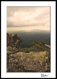 Roan Mountain Summit