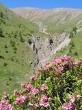 Col Lacroix Flora & Fauna