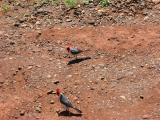 2 little birds at the Diamond Head bus stop