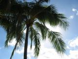 sun behind palm tree