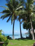 palm trees in Waikiki