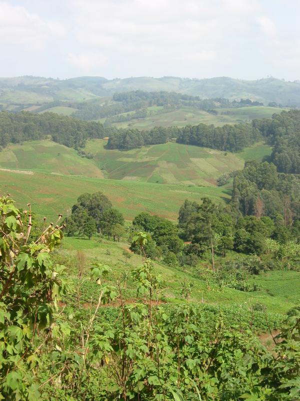 Patterned fields on road to Ndu