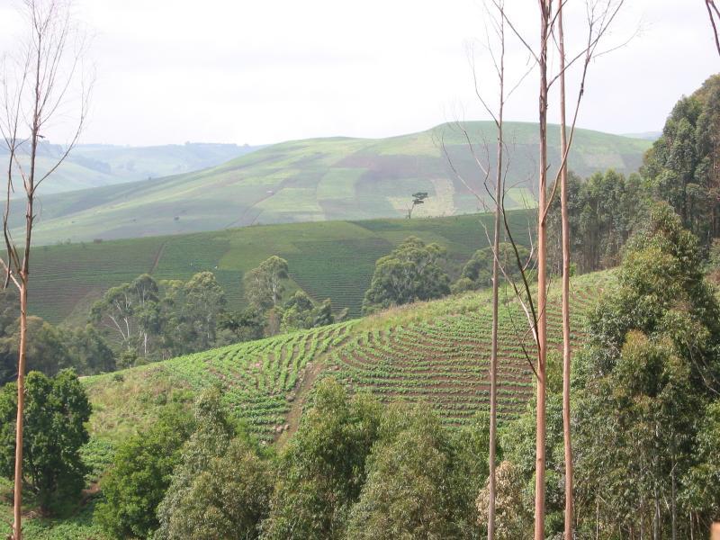 Fields on road from Ndu