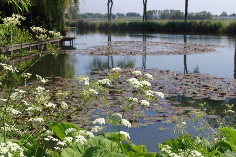 White flowers near pond