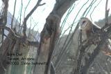 Barn Owl C0069.jpg