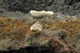 Sea-Lions.jpg