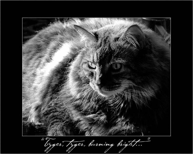 Tyger, Tyger, Burning Bright...