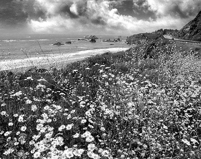 Springtime Along The Coast Highway