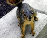 May 11, 2004 - Curious Critter