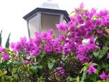 Lampost Flowers