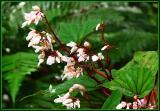 Flora on Mt Kinabalu