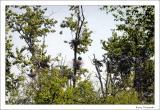 Great Blue Heron Reserve
