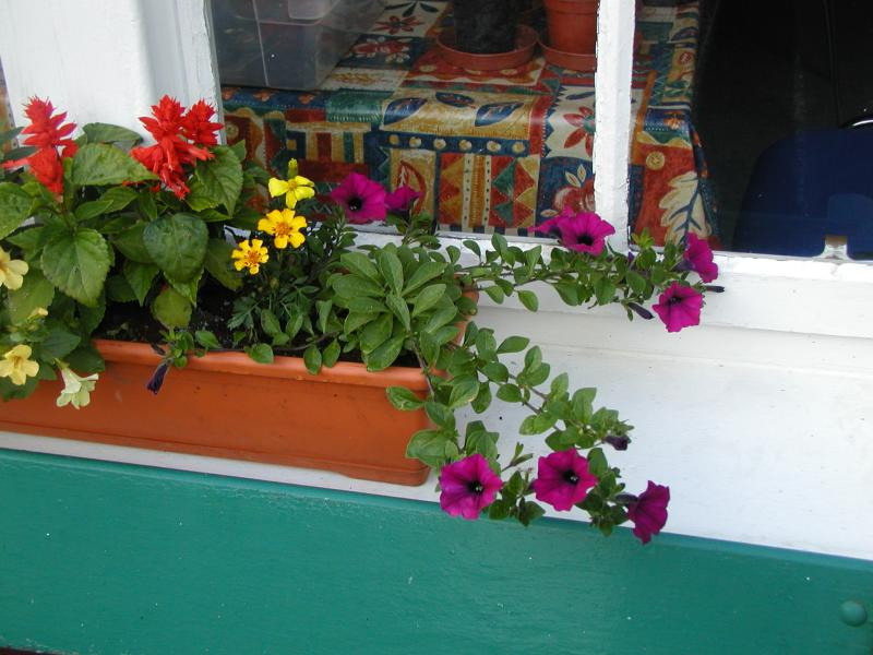 Tralee Window Box