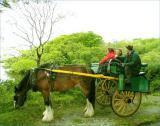 Kerry ponycart