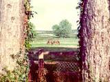 Horses at the base of Watership Down