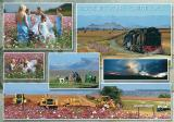 Multi - Image Collages