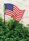 American Anole