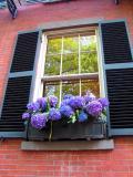 Beacon Hill window.jpg