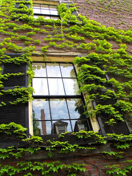 ivy and reflection.jpg