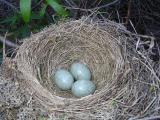 Nests of Birds
