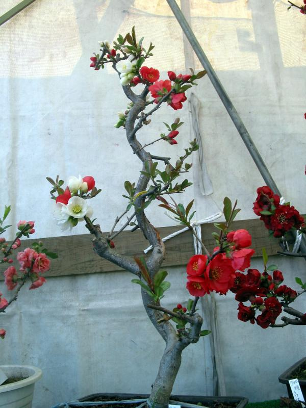 Flowers in Sendai