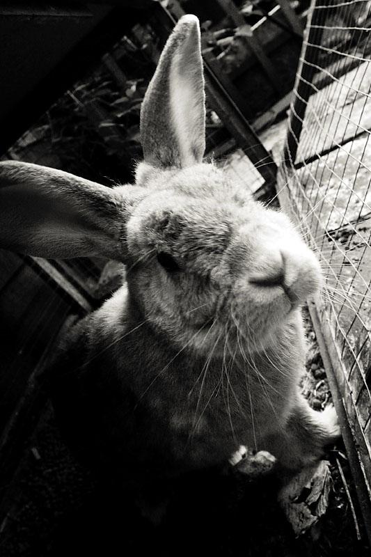 May 10: Rabbit