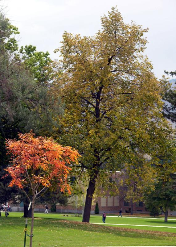 Autumn at ISU DSCN5331.jpg