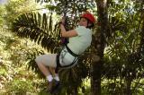 Canopy Safari